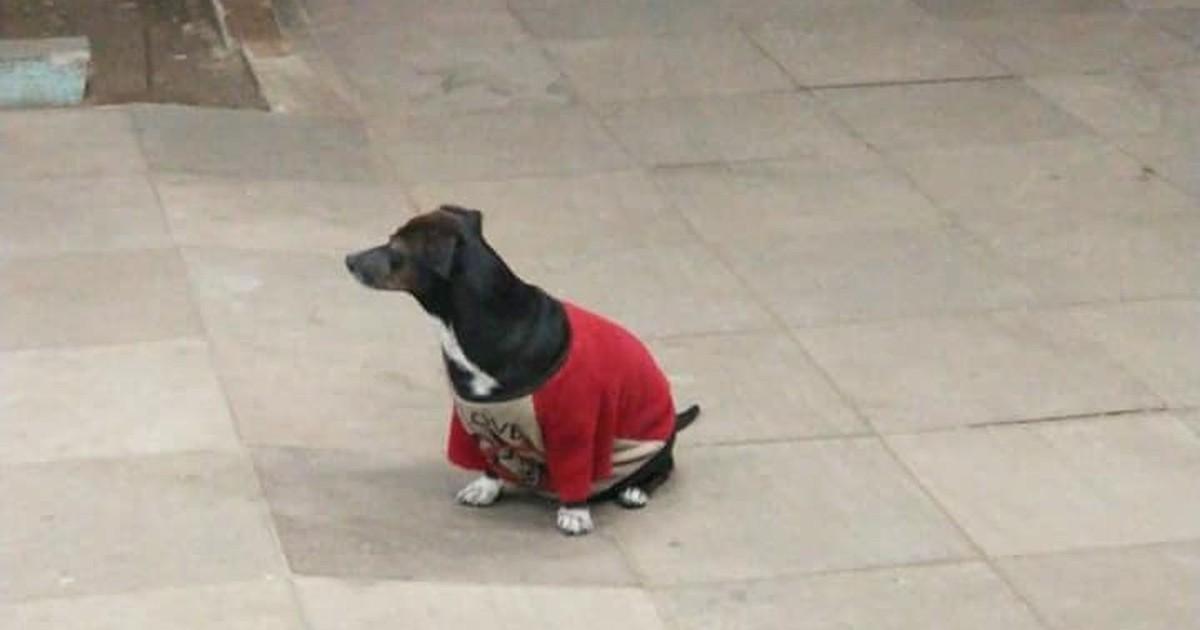 Hund will Herrchen nicht alleine lassen und fährt mit ins Krankenhaus