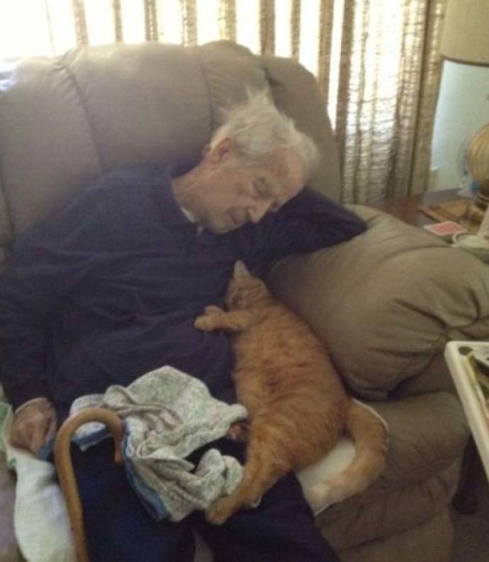 Großvater und Katze schlafen auf dem Sofa