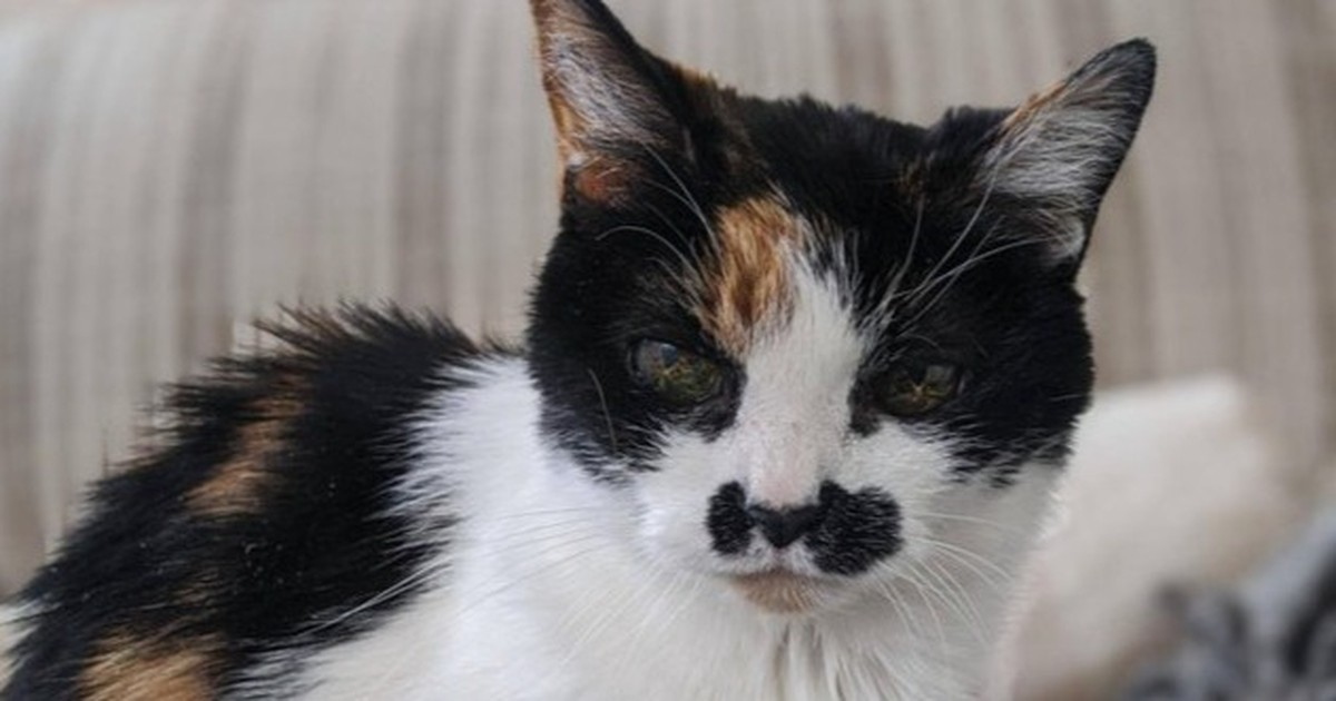 10 süße Bilder von alten Katzen