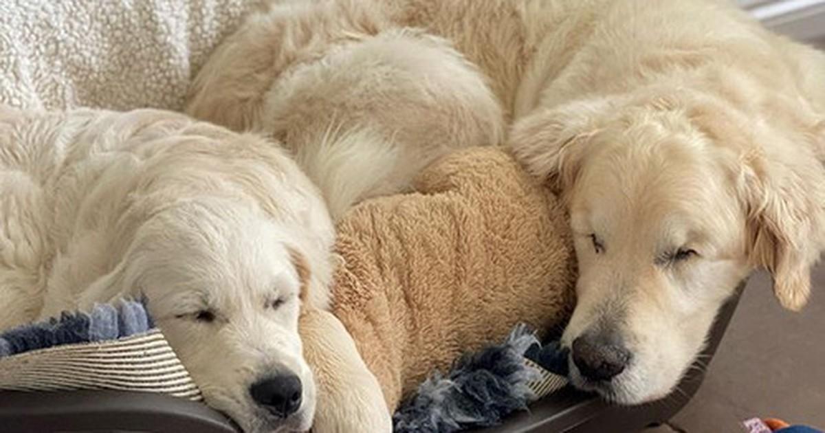 Blinder Hund bekommt Welpen als Blindenhund