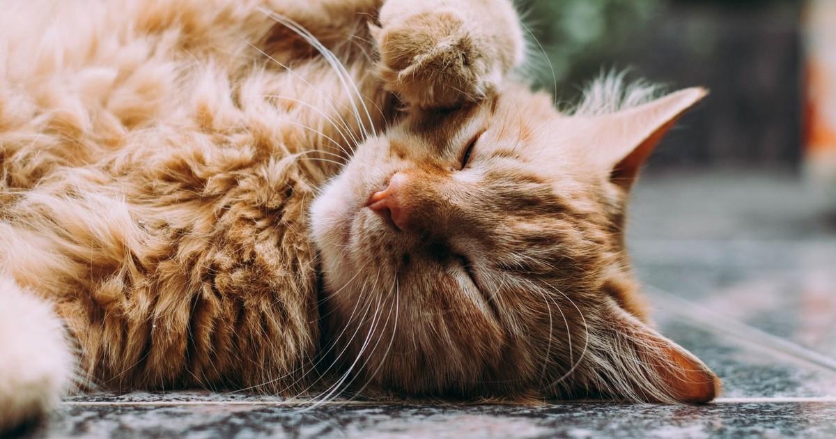 Darum solltest du deine Katze öfter anblinzeln
