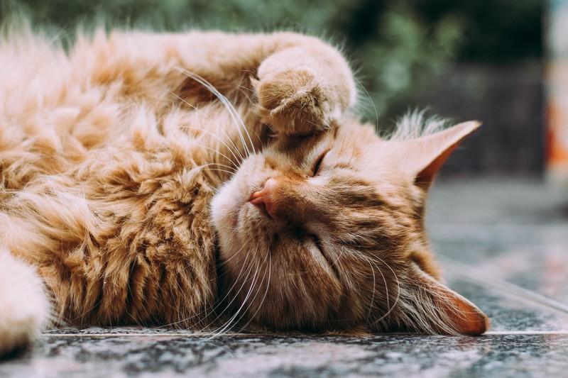 Damit die Katze das Zeichen versteht, muss man ganz langsam blinzeln.