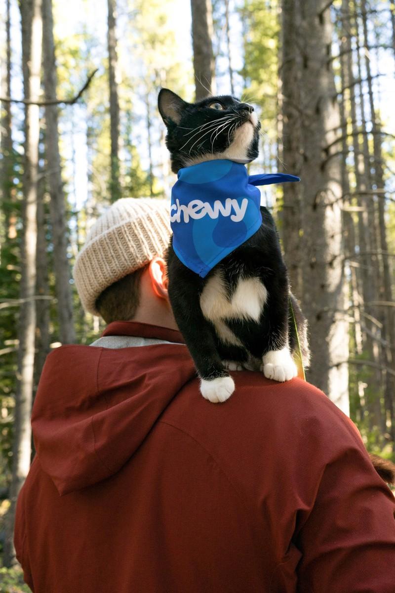 Katzen sind tolle Tiere.