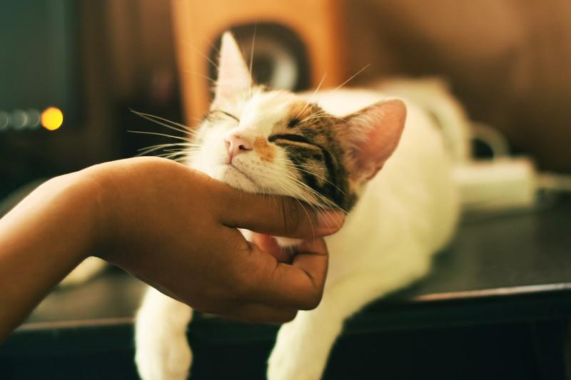 Man sollte seine Katze öfters anblinzeln.