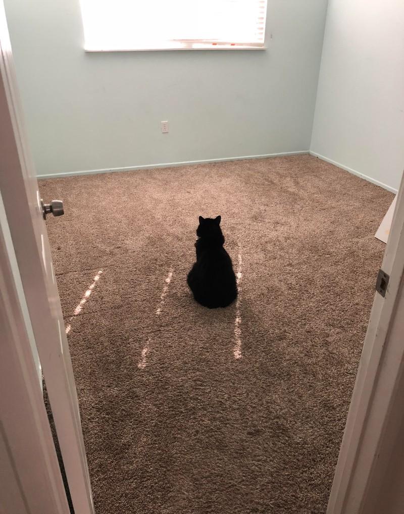 Auch Katzen halten sich an Regeln, auch wenn sie keinen Sinn machen für uns Menschen.