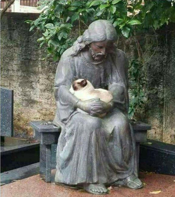 Die Katze kam auf die seltsame Idee sich in den Schoß einer Statue zu setzen.