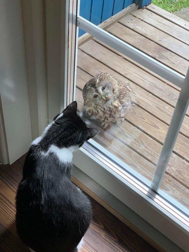 Die Katze schaut neugierig auf die Eule.