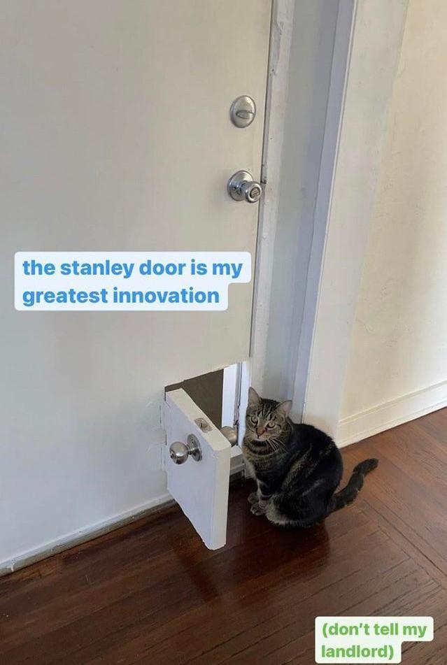 Diese Katze hat sogar eine eigene Tür bekommen.