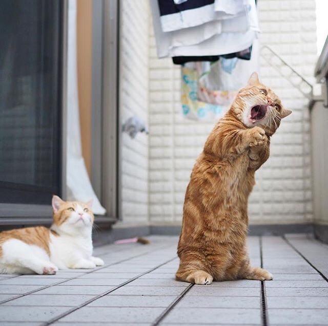 Es sieht fast so aus als würde die Katze singen.