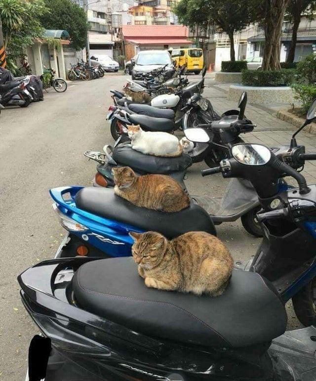 Manchmal sind Katzen sehr komisch.