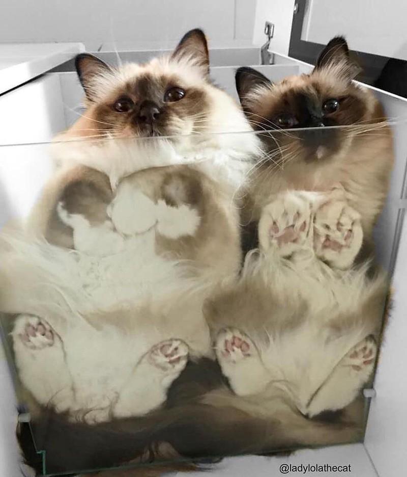 Zwei Katzen haben sich zusammen in eine durchsichtige Kiste gekuschelt.