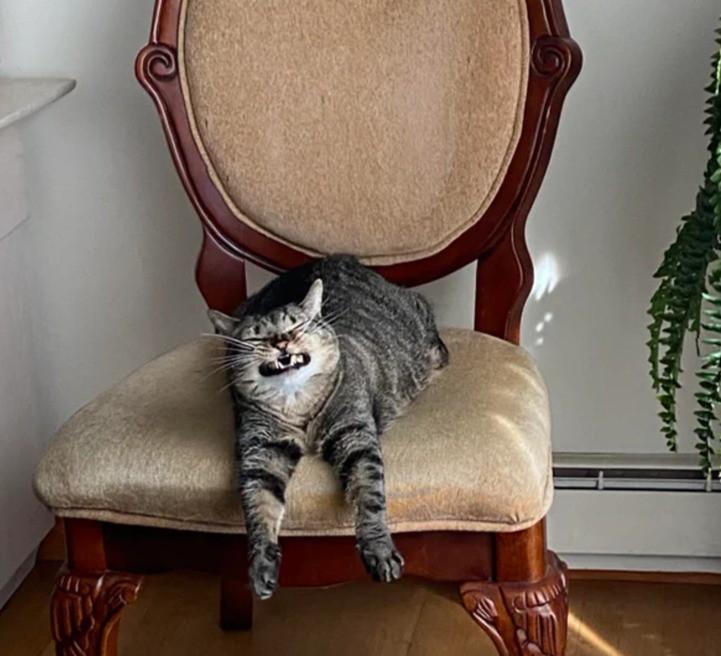 Katze, die auf einem Stuhl chillt