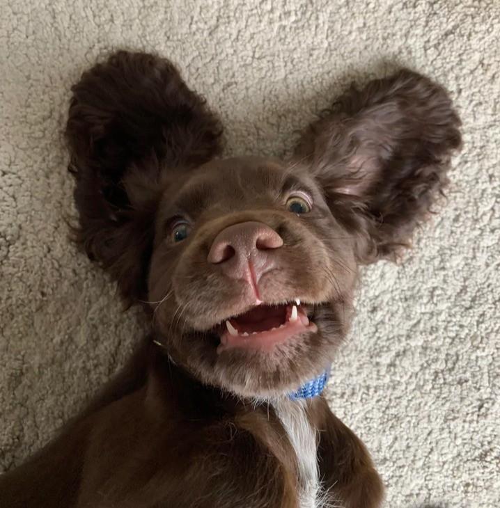 Süßer Hund, der sich gerade entspannt