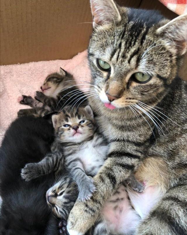 Süßes Bild von Katzenmama und Kätzchen