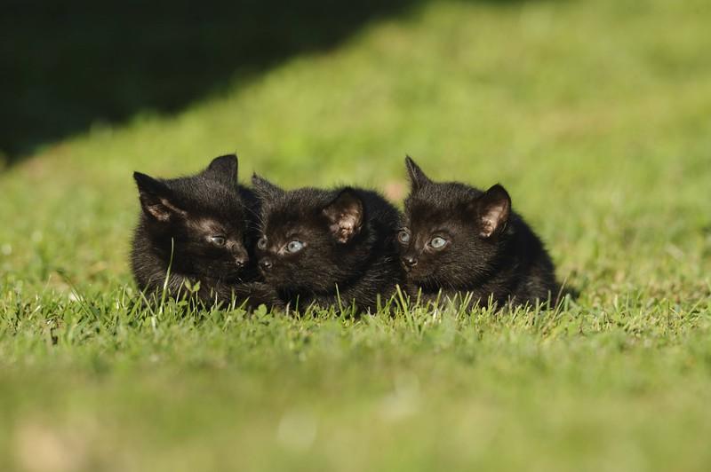 Eine Katze bringt ihre ganzen Jungen mit.