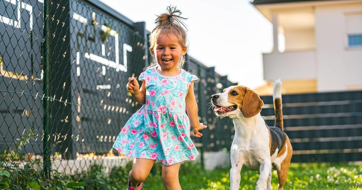 Erste Hilfe nach Giftköder: Wie rette ich meinen Hund?