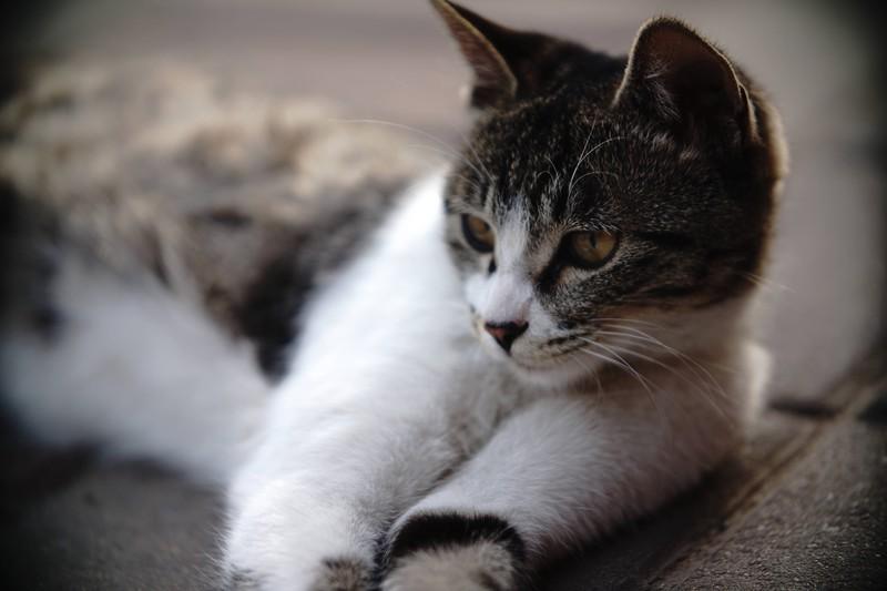 Eine Katze entspannt sich