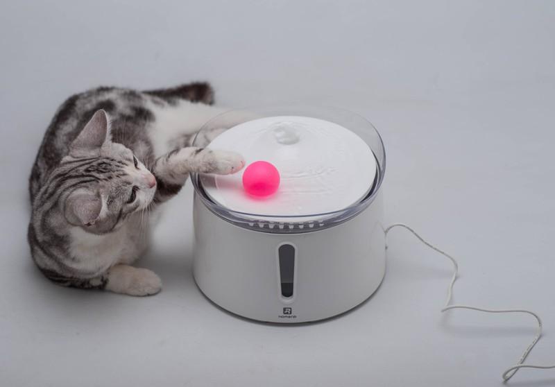 Auch ein Elektrospielzeug für Katzen kann helfen, wenn man in Ruhe arbeiten muss