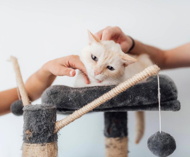 Beschäftige deine Katze bevor du arbeitest.