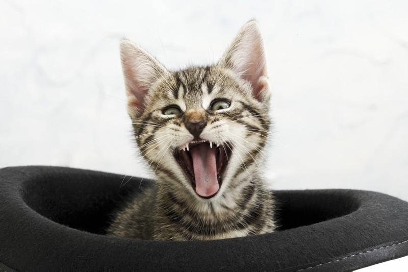 Katzen gewöhnen sich daran, wenn man immer auf ihr miauen reagiert.