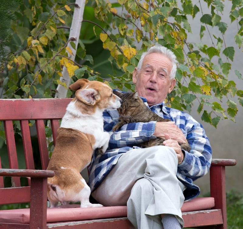 Manchmal lieben sich Hund und Katze.