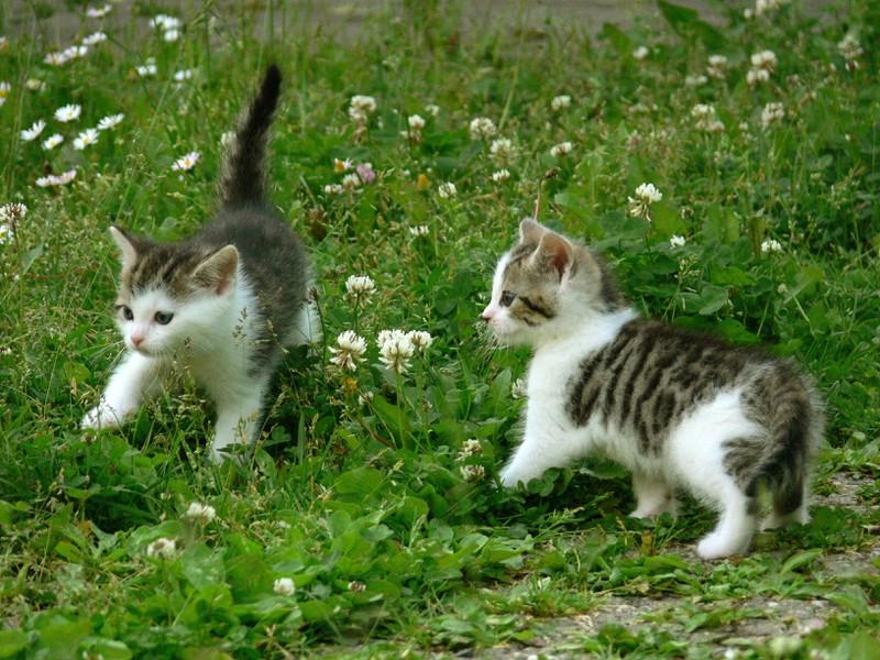 Die Katzen tollen umher, nachdem sie geschmust haben.
