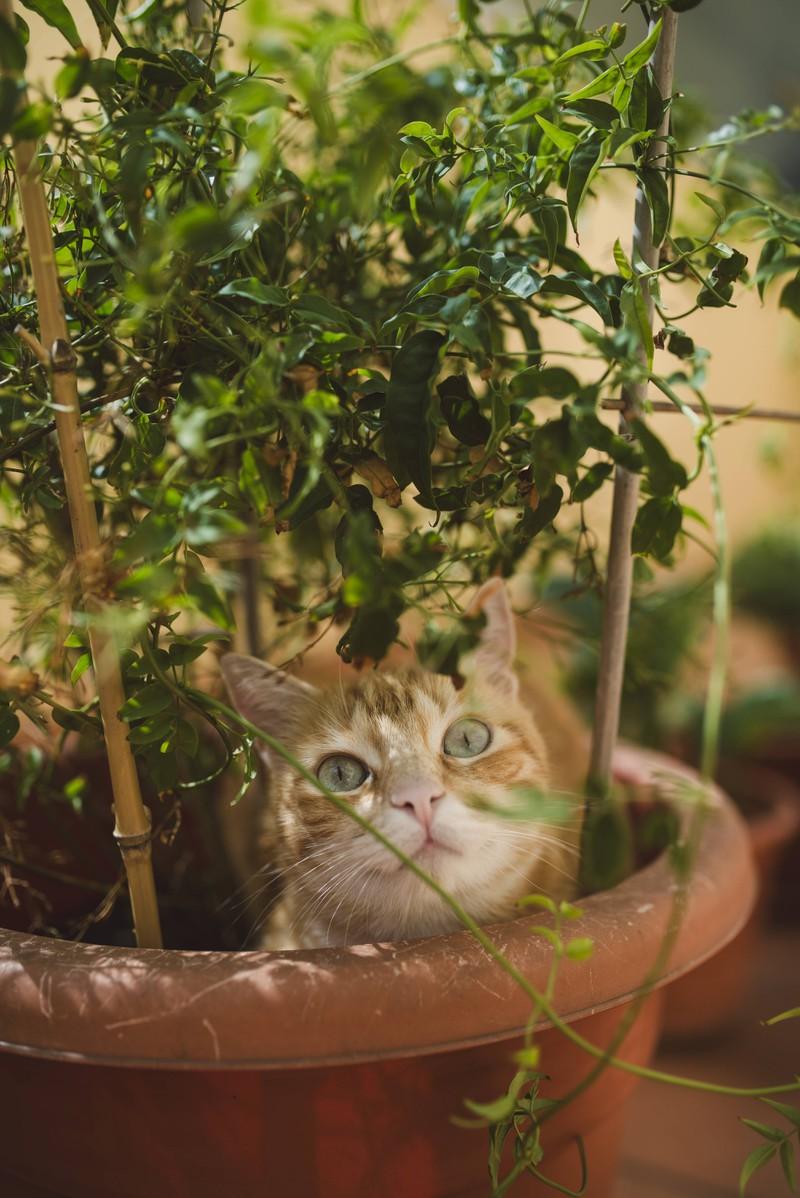 Katzen ist es wichtig, sich zu tarnen und zu verstecken.