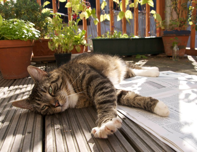 Katzen lieben es an der frischen Luft und in der Sonne zu sein.