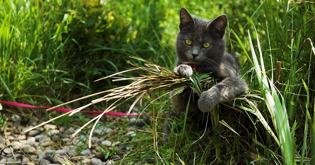 Wie kannst du deine Katze an den Freigang gewöhnen?