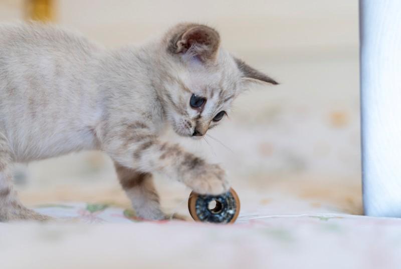 Das Spielzeug sollte man immer wegräumen, damit es für faule Katzen interessant bleibt