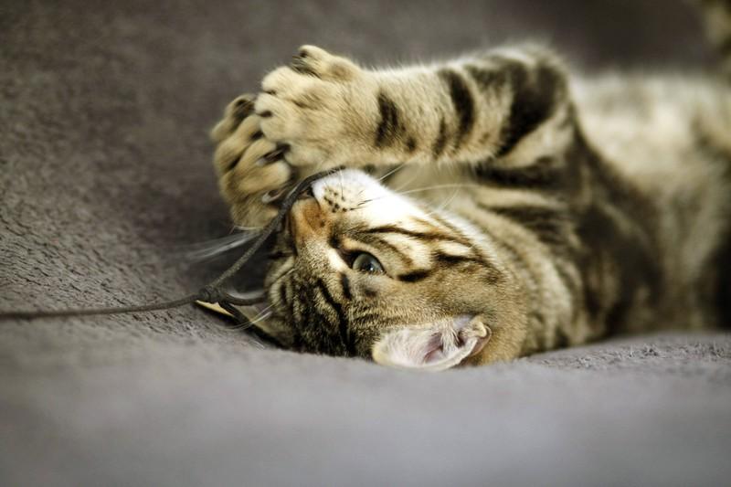 Es ist wichtig zu schauen, ob die Katze in Spiellaune ist
