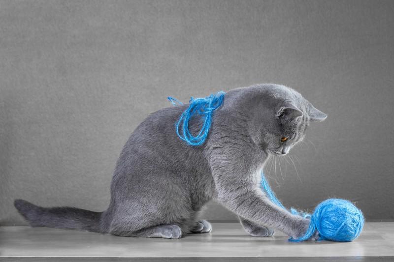 Faule Katzen können sich für die alltäglichsten Gegenstände begeistern.