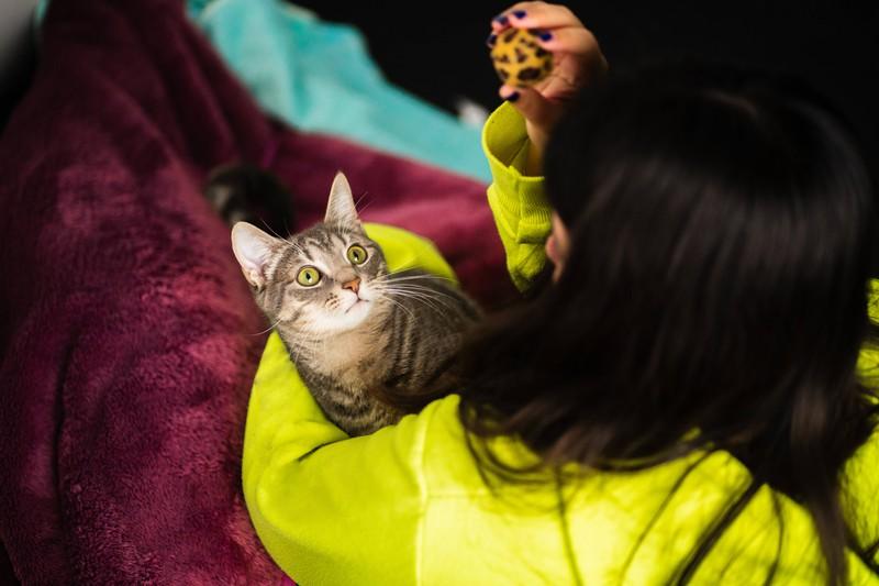 Man sollte sich auch Zeit nehmen, um mit der faulen Katze zu spielen