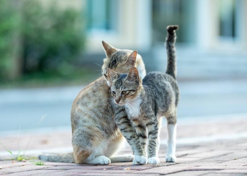 Oft bringt eine zweite Katze mehr Bewegung in das Leben einer faulen Katze.