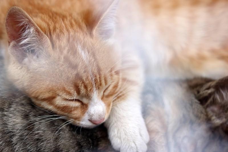 Viele denken, Katzen seien faul, wenn sie nicht spielen
