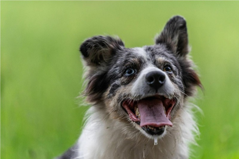 Auswahl und Ernährung der richtigen Hunderasse*