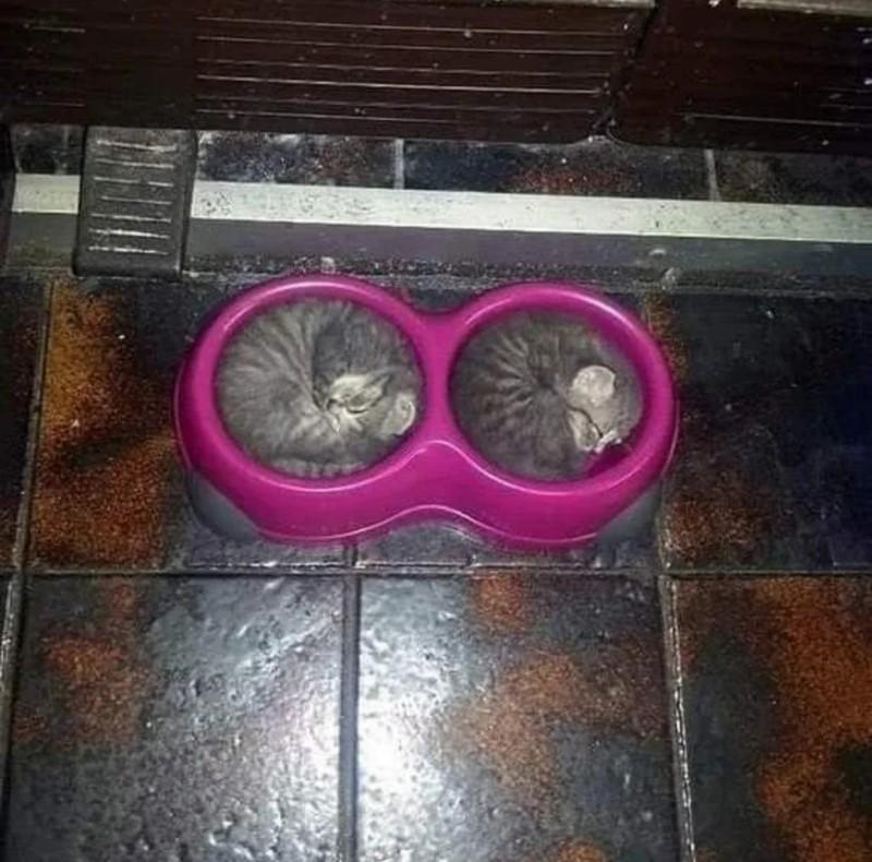 Katzen schlafen ganz entspannt in ihren Futternäpfen.