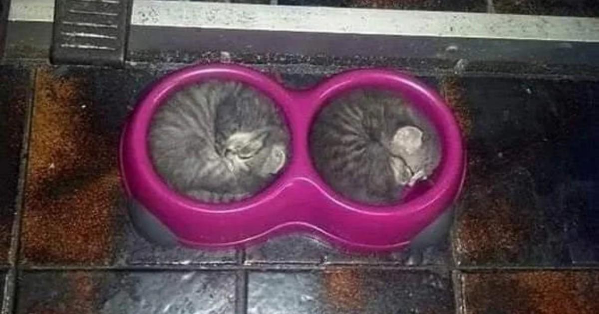 13 lustige Katzen, die es einfach bequem haben wollen