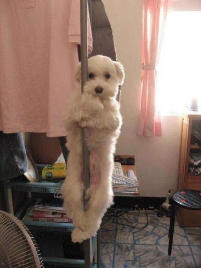 Da trainiert jemand als Pole-Dancer und kommt sicher einmal ganz groß raus